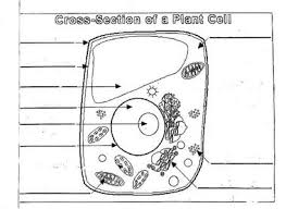 plant cell diagram worksheet plant cell diagram unlabeled animal