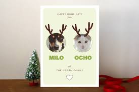 5 ideas for a greeting card starring your cat catster