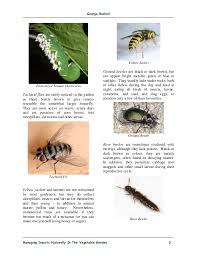 managing insects naturally in the vegetable garden ottawa canada