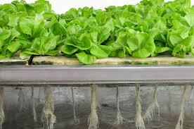 rebuild garden and start indoor vegetable garden