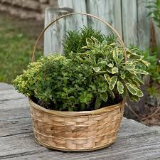 Potted Herb Garden Ideas 35 Herb Container Gardens Pots Planters Saturday Inspiration