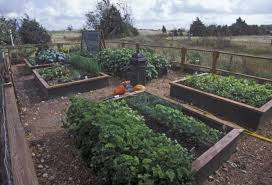 fall vegetable planting guide houston chronicle