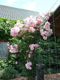 Immobilien Haus Kaufen Privat Haus Kaufen Mit Garten