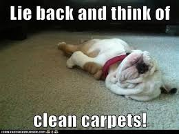 Carpet Cleaning Meme - 12 best pet urine odor removal images on pinterest pet urine