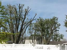 improper and damaging gardening practices