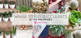 where to buy succulents in the philippines 18 shops you should know