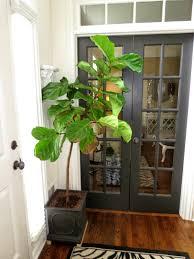 house plants decorating ideas