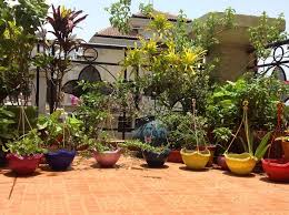 831 best flowering terraces and balconies images on pinterest