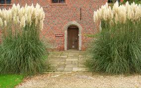 pampas ornamental grass for sale naples