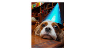 cavalier king charles spaniel birthday card zazzle