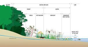 wetlands teaching great lakes science