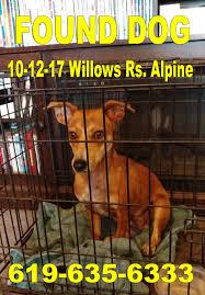 report lost u0026 found pets in alpine