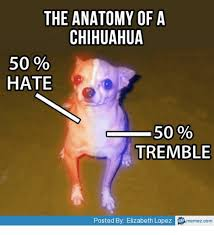 Funny Chihuahua Memes - 25 best memes about funny chihuahua meme funny chihuahua memes