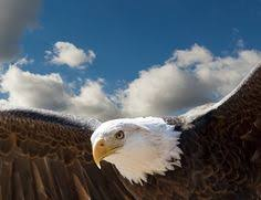 strange eagle wallpapers 3d desktop wallpaper wallpaper 3d is wallapers for pc desktop