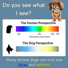 Are Dogs And Cats Color Blind Can Dogs See In Colour Vision Periodic Tables