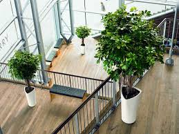 Indoor Trees For The Home by Office Plant And Maintenance Indication Office Architect