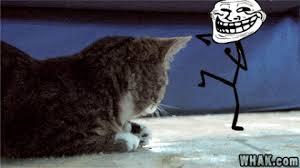 Lol Meme Gif - imagen wtf lol cat lolcat troll trollface kitten stick tongue