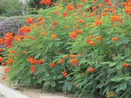 Wildfire Pottery Yarrow Bc by Guide For Landscape Arizona Backyard Landscaping Pictures 97