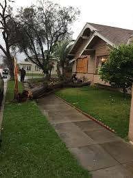 here are some of the downed trees that fell in orange county