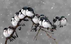 hd freezing birds on the branch wallpaper free 148768
