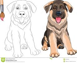 vector coloring book of puppy shepherd stock images image 27935264