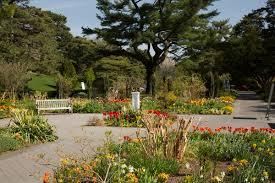 Rock Garden Perennials by Perennial Garden Archives Plant Talk