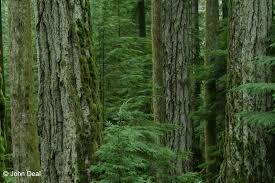 Adaptations Of Tropical Rainforest Plants - endangeredspeciesbiomesprojects the spirit bear