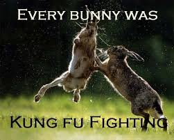 Kung Fu Meme - every bunny was kung fu fighting meme everything inspirational