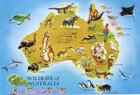 Austrailia Map Large Detailed Wildlife Map Of Australia Australia Large Detailed