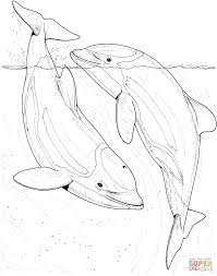 two dolphin in the sea coloring page free printable coloring pages