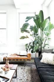 ideas for home decoration home decor plants plant home decor decoration using plants best