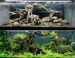 Planted Aquarium Aquascaping Aquascaping Before After Aquascaping Pinterest Aquariums