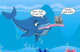 Whale Meme - how do whales survive by eating krill 盪 science abc