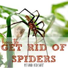 I Tried Killing A Spider - how to get rid of spiders in your home housewife how to s