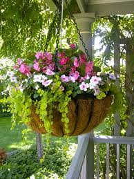 Best Plants For Hanging Baskets by Best 25 Hanging Flower Baskets Ideas On Pinterest Plants For
