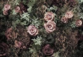 and pink velvet roses paper wallpaper homewallmurals black and pink velvet roses wall mural wallpaper