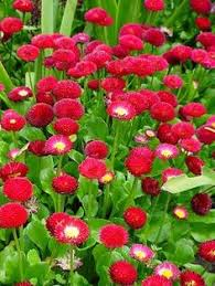 perennial garden ideas garden ideas 50 perennial flower