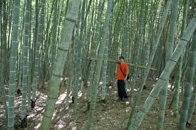 native plants of china bamboo garden nursery