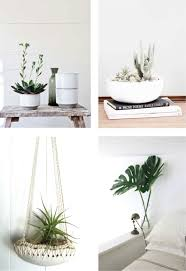 home decoration with plants coastal style decorating with indoor plants
