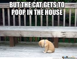 Cute Puppy Memes - cute puppy memes best collection of funny cute puppy pictures
