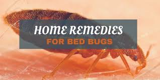 Home Remedies For Getting Rid Of Bed Bugs Fightbugs Com Do It Yourself Pest Control Tips Tricks Ideas