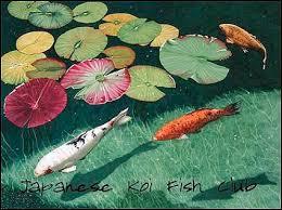koi id by japanese koi fish on deviantart