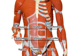 Human Anatomy Planes Of The Body Anatomy And Physiology