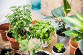 the ultimate guide to indoor plants ambius