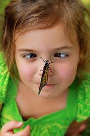 the year in pictures butterfly kisses butterfly and moth