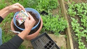native plant plugs mfg 2016 starting u0026 planting perennial annual flower plugs for