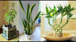 7 plants that attract positive energy at home and in the office