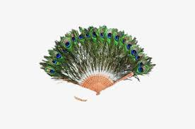 peacock feather fan peacock feathers fan peacock feather fan style png