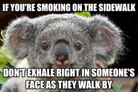 Koala Meme - common courtesy koala meme guy