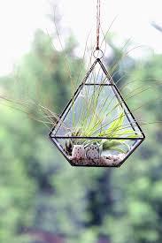 air plant terrariums by dingading